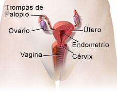Causas y síntomas de la cérvix incompetente