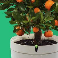 Tecnología para plantas y jardín: guía de compra de domótica y otros dispositivos para cuidar tus plantas cuando estás fuera
