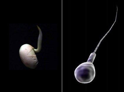 La soja y los espermatozoides no son buenos amigos