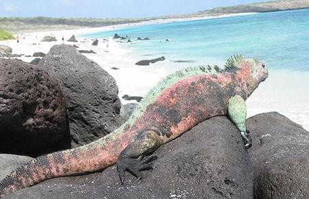 Islas Galápagos: primer aeropuerto ecológico del mundo