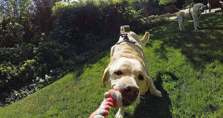 Gopro Fetch