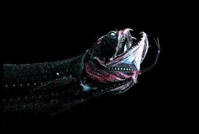 Algunas criaturas que podríamos encontrar en la fosa de las Marianas, el lugar más profundo del mundo