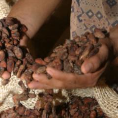 Foto 2 de 4 de la galería cacao-xocolatl-chocolate-festival-internacional en Directo al Paladar México