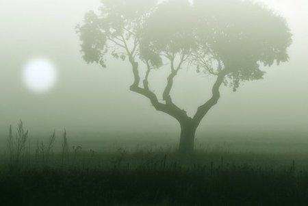 Nueve fotografías de niebla para inspirarte