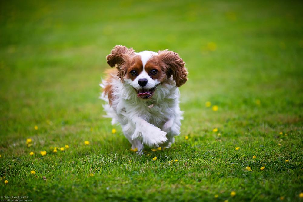 Como Fotografiar Mascotas I Perros 11