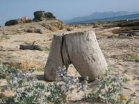 Hallazgo en la playa: escultura natural