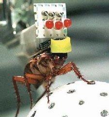 Cucaracha con implantes cibernéticos