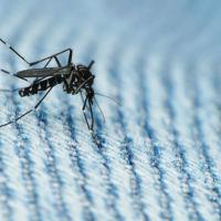 A la caza del animal más peligroso de la tierra: un ejército de mosquitos contra el Zika