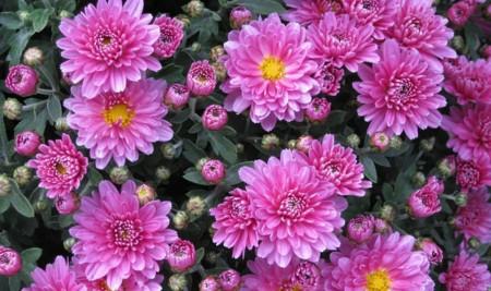 Flor13