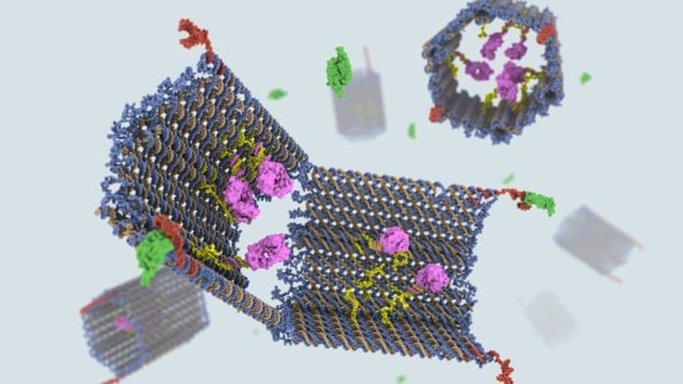 Ordenadores vivientes y nanorobots: ADN más allá de la genética 1366_2000