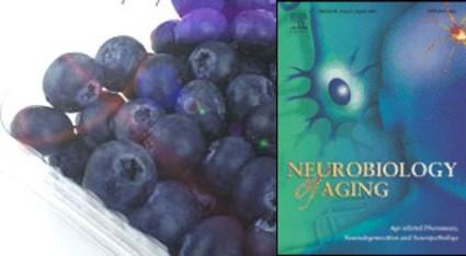 Los arándanos podrían aliviar enfermedades neurodegenerativas como el Alzheimer