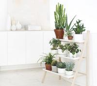 Crea rincones con plantas y flores