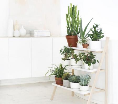 R pidas y f ciles ideas para crear rincones con plantas y for Jardines pequenos esquineros