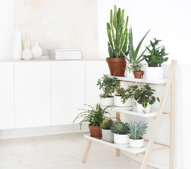R pidas y f ciles ideas para crear rincones con plantas y - Estantes para plantas ...