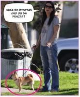 Sandra Bullock y su perro de tres patas
