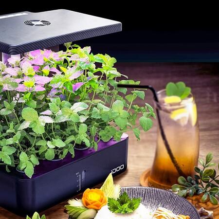 De tu huerto a tus platos: cinco huertos de interior o jardines hidropónicos para cultivar tus propias especias