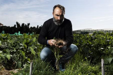 Dejó su trabajo en IBM para recuperar un método de huerta olvidado: ahora cultiva los mejores guisantes de España