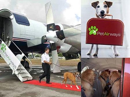 Pet Airways, línea aérea para ellos
