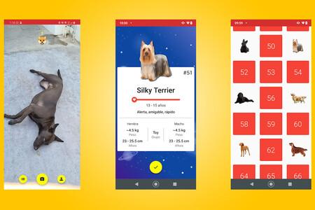 Todogs es una app para identificar y catalogar a los perros que te encuentras por la calle