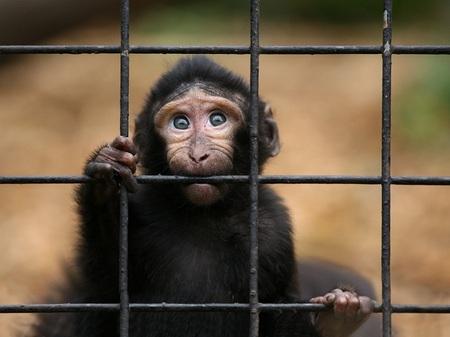 A 30.000 pies de altura: Air France suspende el transporte de primates para experimentación