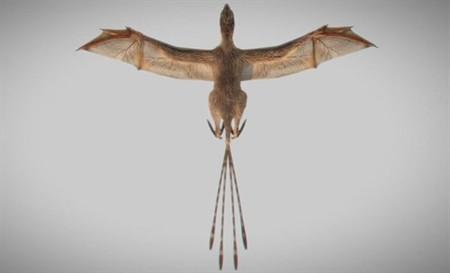 Este nuevo dinosaurio descubierto tiene alas de murciélago