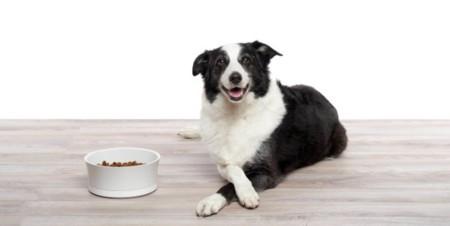ProBowl cuantifica lo que come tu mascota y te avisa si hay excesos o problemas