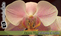 Canon 7D, análisis del ruido