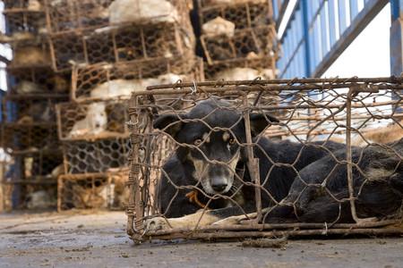 Taiwán prohibe el sacrificio de perros y gatos para el consumo