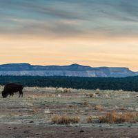 Cuando quisimos matar a los búfalos: no hay historia más rabiosamente actual que la de por qué quisieron destruir al bisonte