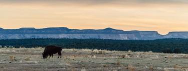 """Cuando quisimos matar a los búfalos: así fue como EEUU decidió erradicar los bisontes para resolver el """"problema indio"""""""
