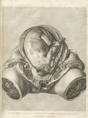 vientre embarazo