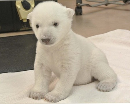 Cosas tontas que te alegran el día: elegir el nombre de un osito polar