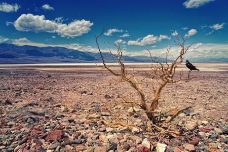 El calentamiento global es la causa del 37% de las muertes en el planeta en las últimas décadas relacionadas con el calor, según estudio