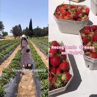 Pagar 8€ para que tú recojas un kilo de fresas: otra experiencia fascinante del tardocapitalismo