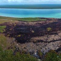 9 chefs unirán cocinas para ayudar a rescatar a la incendiada reserva natural de Sian Ka'an, en Quintana Roo
