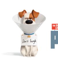 'Mascotas 2' no arriesga: mantiene lo que funcionó en la primera entrega