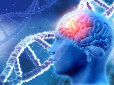 Nuestro cerebro necesita colesterol, no lo demonicemos: evidencia científica (y II)