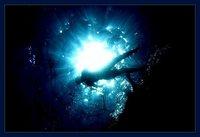 Opciones económicas para hacer fotos bajo el agua