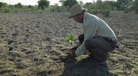 El hombre que empezó a plantar árboles en una isla y ya tiene un bosque mayor que Central Park