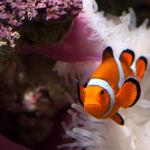Perdiendo a Nemo: así se está muriendo la Gran Barrera de Coral