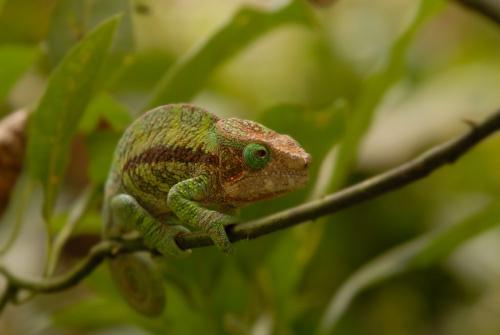 Foto de Madagascar (1/5)
