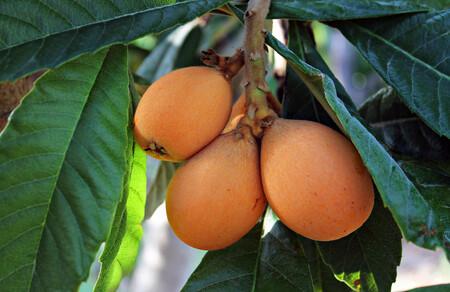 Níspero de temporada: características, propiedades y usos en la cocina de la primera fruta de primavera