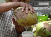 Árbol de todas las dotes y su fruto: el coco