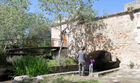 Albufera Mallorca con niños