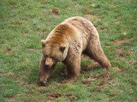El abrazo del oso