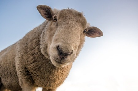Cómo sobreviven los ganaderos en tiempos de COVID-19, creatividad y sinergias