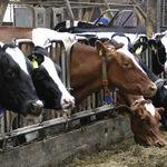 Sí, el consumo de carne tiene un impacto importante en el cambio climático