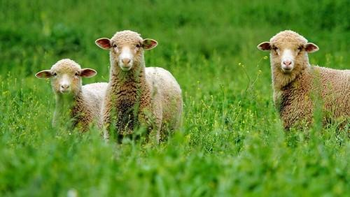 Tres granjas donde alojarte y probar la vida rural de verdad