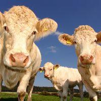 Más de 13 años comprando carne picada de vacuno que no es tal: nos están dando gato por liebre