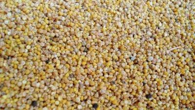 La quinoa, un alimento desconocido con muchas propiedades nutricionales